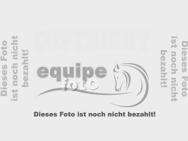 Prüfung 04 (Geländepferdeprüfung Kl.L)